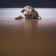 sorrowful puppy